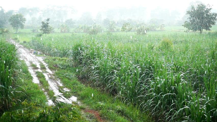 जाणीव विकासासाठी शेती आधारित जीवनशैली भाग – ५
