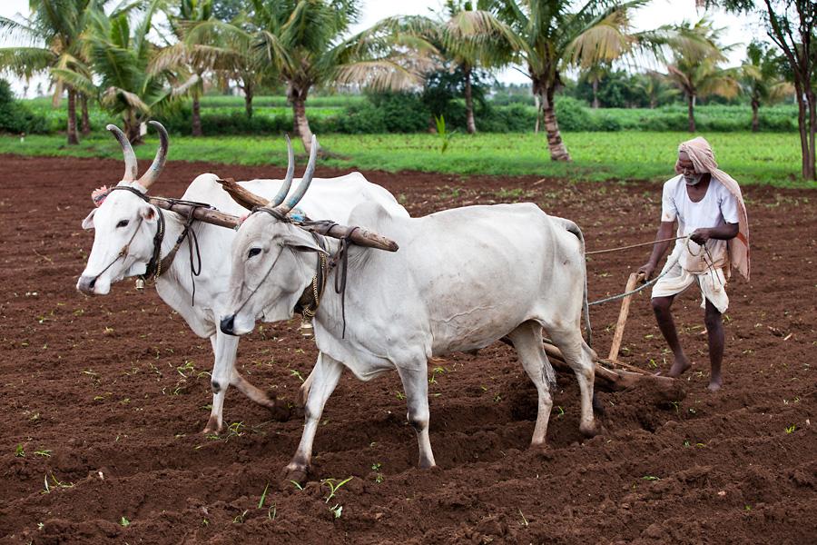 जाणीव विकासासाठी शेती आधारित जीवनशैली – 7